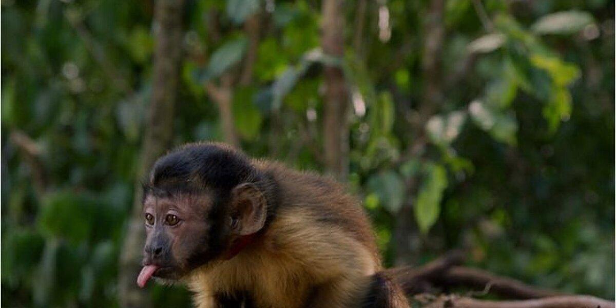 Biloba - Amazonia - 2D