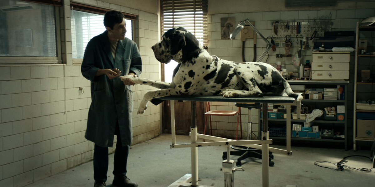 Archimede - Dogman