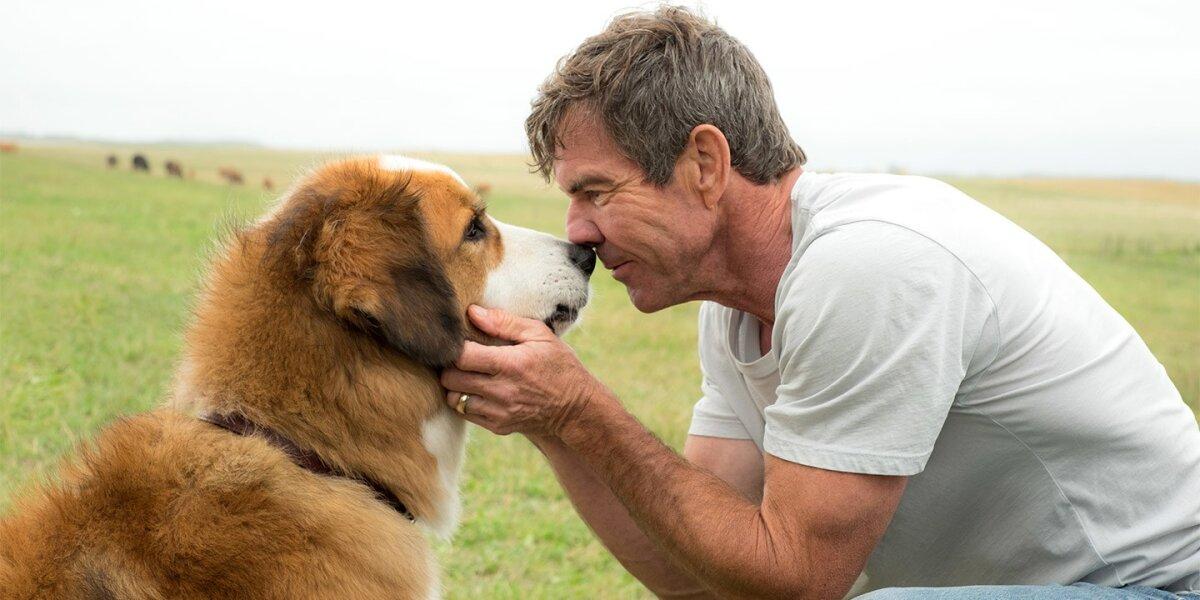 DreamWorks - A Dog's Journey