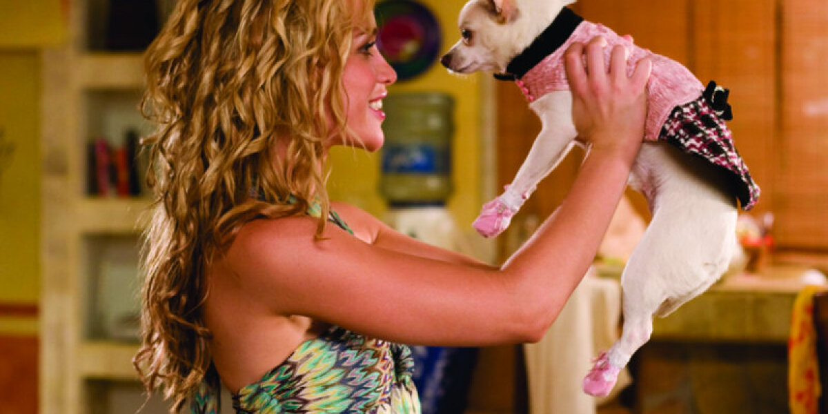Smart Entertainment - Beverly Hills Chihuahua