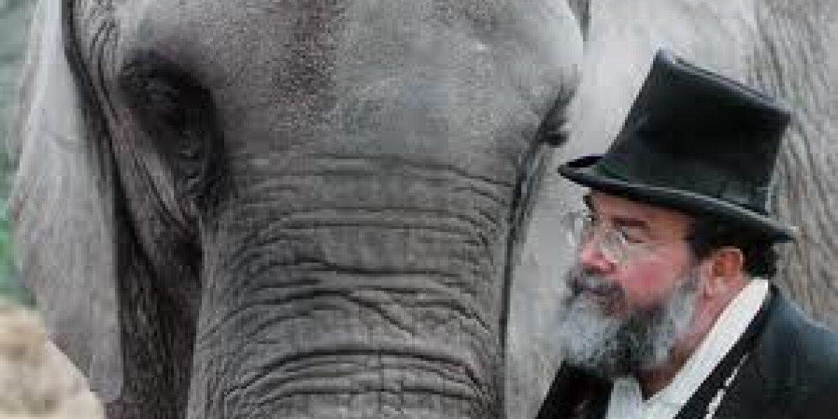 Sandbar Pictures - One Lucky Elephant